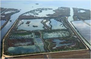 """Constructed Wetland """"Tancat de la Pipa"""", CWTP."""