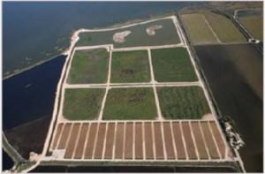 "Constructed Wetland ""Tancat de Milia"", CWTM"