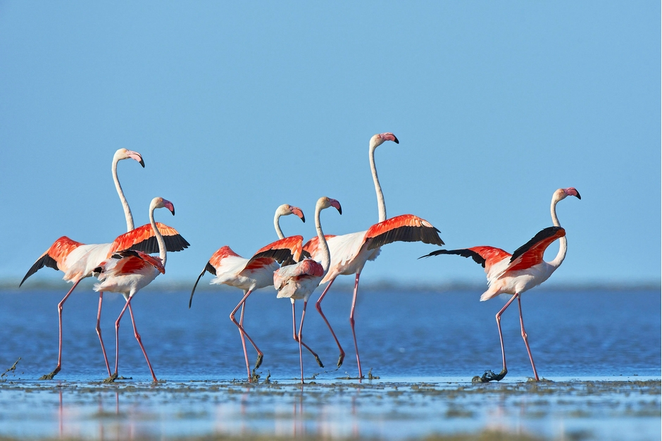 High profile wetlands land cover in ramsar sites in - Flamant rose camargue ...
