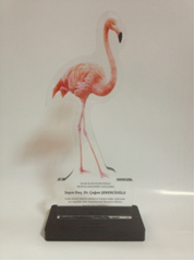 The award given during the WWD2013 celebration in Istanbul