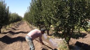 Irrigation ditch at Hima Anjar. Photo credit: SPNL