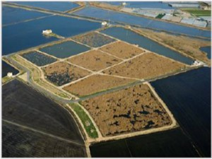 """Constructed Wetland """"Tancat de L'Illa"""", CWTLI"""