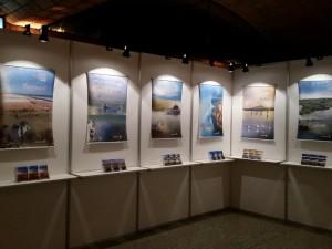 medwet agora exhibition  (5)