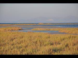 Oropos lagoon (Copy)