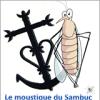 moustique du sambuc