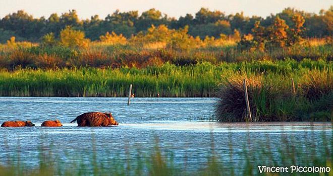 vigueirat-marshes-camargue-photo-vincent-piccolomo