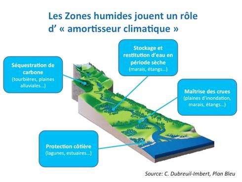 les-zones-humides-amotisseur-climatique-c-dubreuil_plan-bleu
