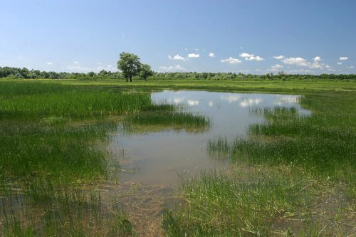 Lonjsko Polje floodplains