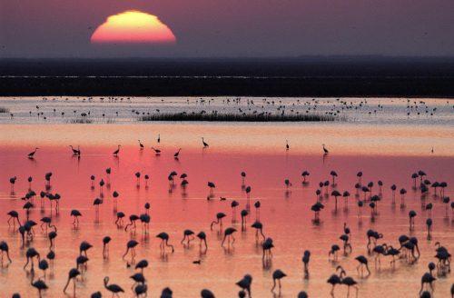 Donana Ramsar Site