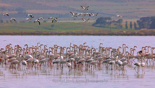 Lake of Telamine Gdyet, Algeria